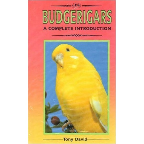 A complete introduction to budgerigars.